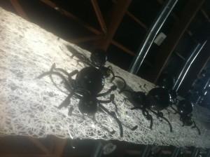 Allestimenti per party ed eventi: ragni di palloncini appesi ad una parete